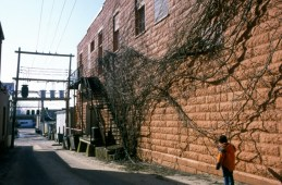 Vines , and I think i have a crush on alleys.